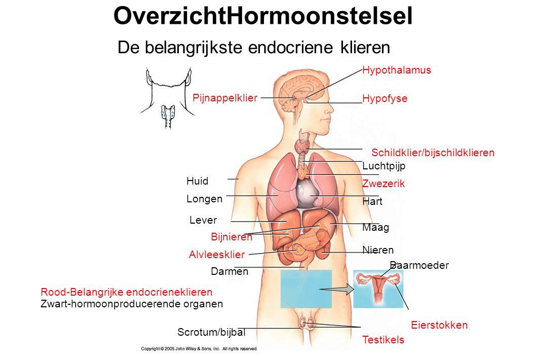 endocriene ziekten diabetes veroorzaken erectistoornis